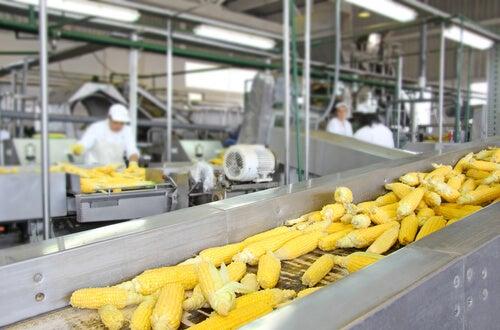 Influencia de los procesos tecnológicos sobre el valor nutritivo de los alimentos