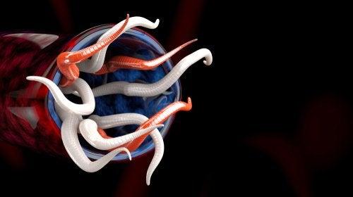 Albendazol: indicaciones y contraindicaciones